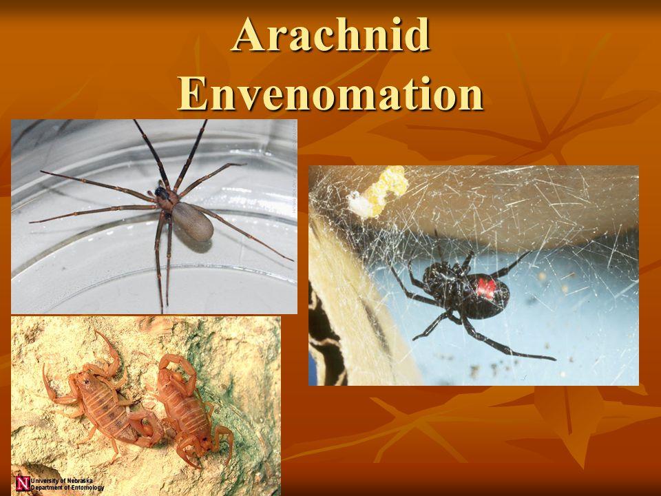 Arachnid Envenomation
