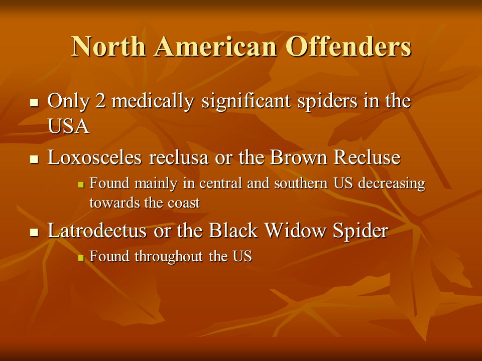 North American Offenders Only 2 medically significant spiders in the USA Only 2 medically significant spiders in the USA Loxosceles reclusa or the Brown Recluse Loxosceles reclusa or the Brown Recluse Found mainly in central and southern US decreasing towards the coast Found mainly in central and southern US decreasing towards the coast Latrodectus or the Black Widow Spider Latrodectus or the Black Widow Spider Found throughout the US Found throughout the US