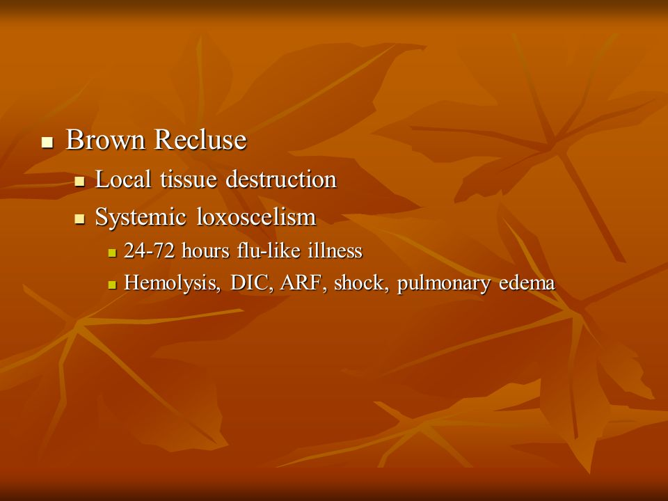 Brown Recluse Brown Recluse Local tissue destruction Local tissue destruction Systemic loxoscelism Systemic loxoscelism 24-72 hours flu-like illness 24-72 hours flu-like illness Hemolysis, DIC, ARF, shock, pulmonary edema Hemolysis, DIC, ARF, shock, pulmonary edema