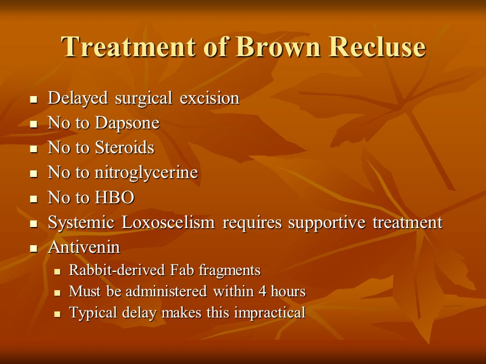 Treatment of Brown Recluse Delayed surgical excision Delayed surgical excision No to Dapsone No to Dapsone No to Steroids No to Steroids No to nitroglycerine No to nitroglycerine No to HBO No to HBO Systemic Loxoscelism requires supportive treatment Systemic Loxoscelism requires supportive treatment Antivenin Antivenin Rabbit-derived Fab fragments Rabbit-derived Fab fragments Must be administered within 4 hours Must be administered within 4 hours Typical delay makes this impractical Typical delay makes this impractical