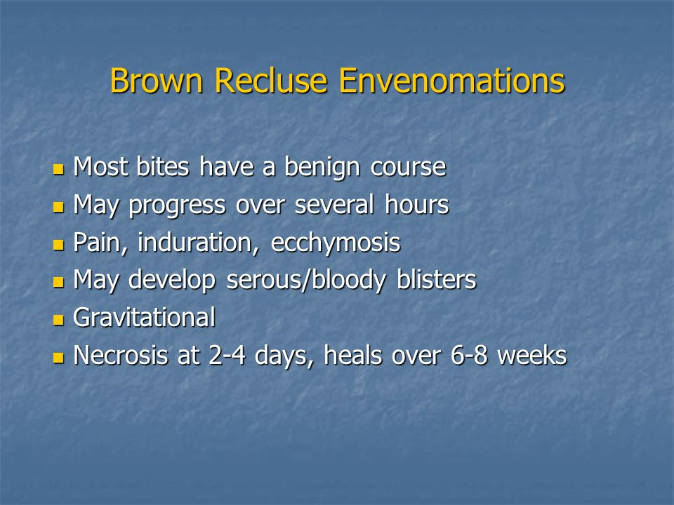 Brown Recluse Envenomations Most bites have a benign course Most bites have a benign course May progress over several hours May progress over several hours Pain, induration, ecchymosis Pain, induration, ecchymosis May develop serous/bloody blisters May develop serous/bloody blisters Gravitational Gravitational Necrosis at 2-4 days, heals over 6-8 weeks Necrosis at 2-4 days, heals over 6-8 weeks