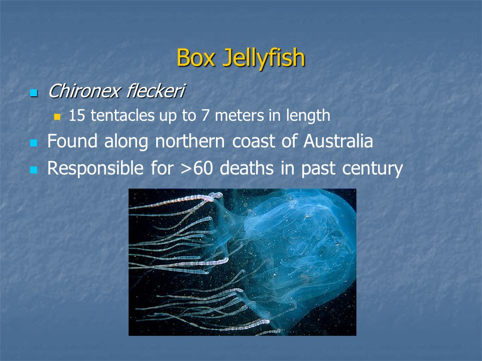 Box Jellyfish Chironex fleckeri Chironex fleckeri 15 tentacles up to 7 meters in length Found along northern coast of Australia Responsible for >60 deaths in past century
