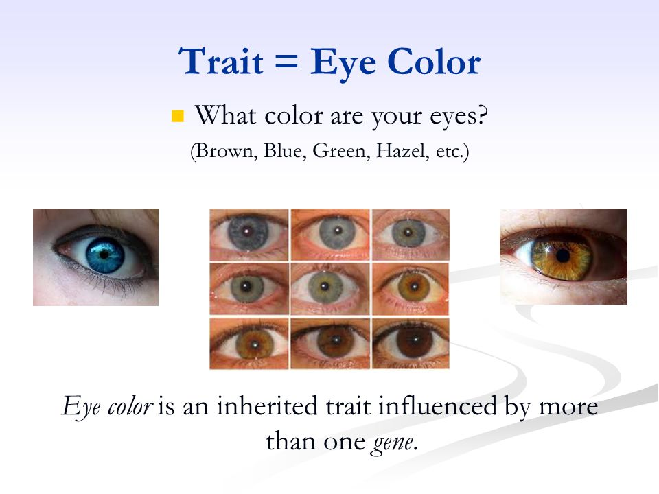 Trait = Eye Color Eye color is an inherited trait influenced by more than one gene.