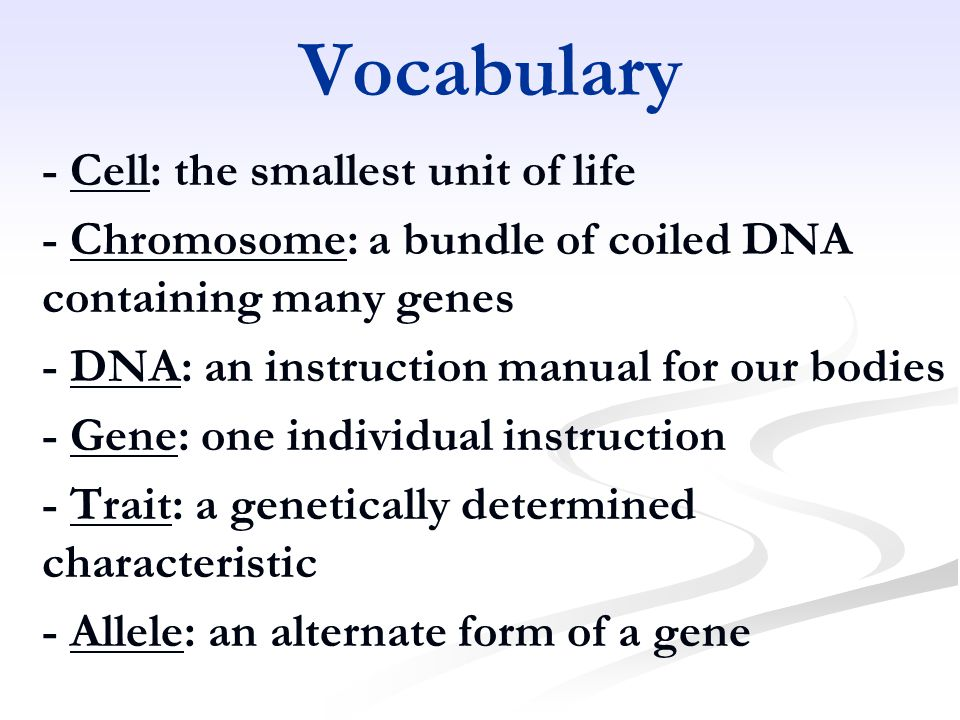 Vocabulary - Cell: the smallest unit of life - Chromosome: a bundle of coiled DNA containing many genes - DNA: an instruction manual for our bodies - Gene: one individual instruction - Trait: a genetically determined characteristic - Allele: an alternate form of a gene