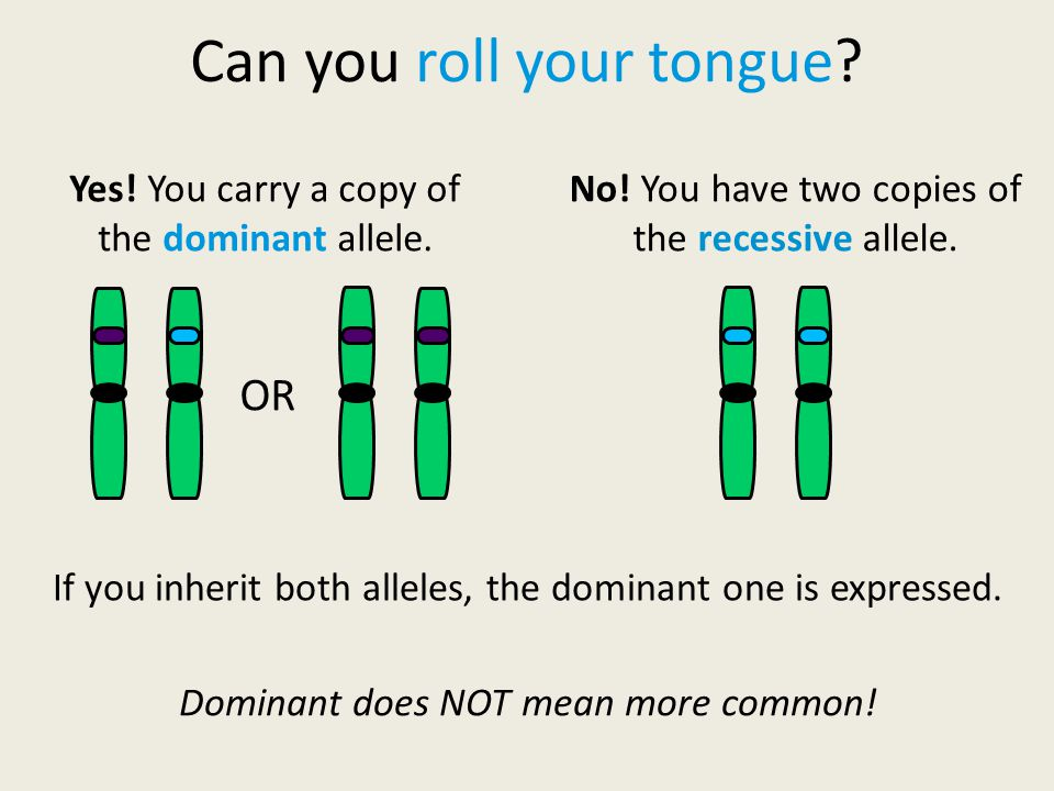 Can you roll your tongue. Yes. You carry a copy of the dominant allele.
