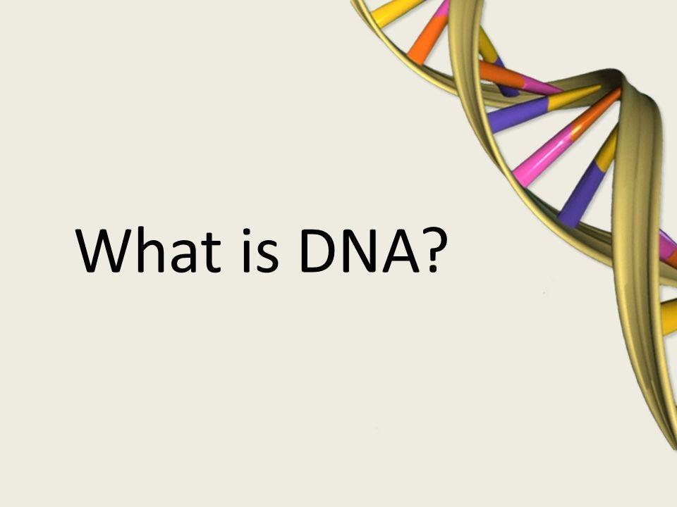 Single-gene Traits P – pinkies bend away (dominant) pp – pinkies are straight (recessive) Pinkies