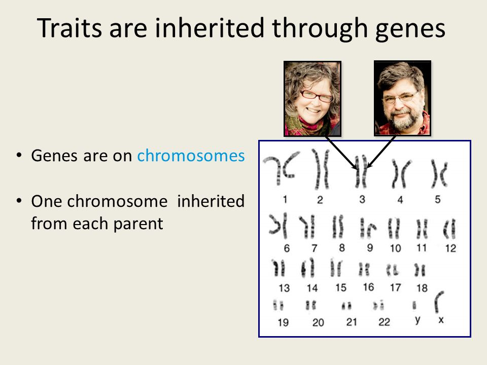 The Genetic Wheel