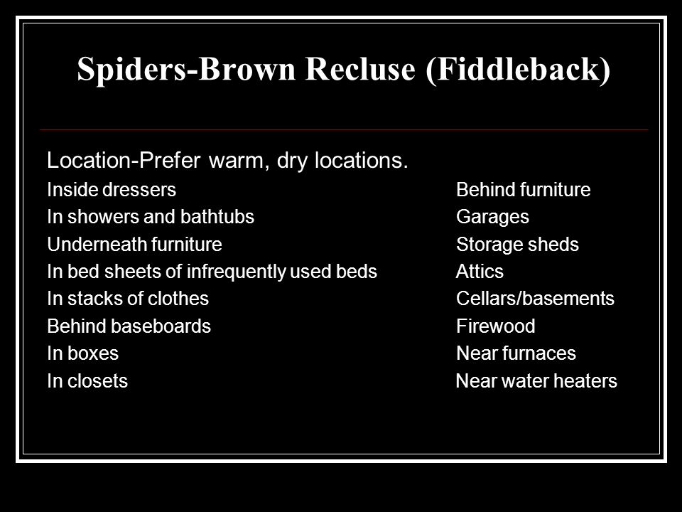 Spiders-Brown Recluse (Fiddleback) Location-Prefer warm, dry locations. Inside dressersBehind furniture In showers and bathtubs Garages Underneath fur