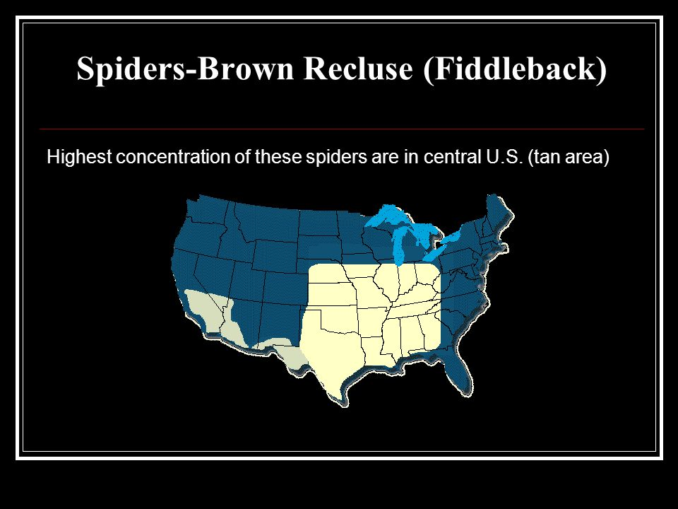 Spiders-Brown Recluse (Fiddleback) Highest concentration of these spiders are in central U.S.