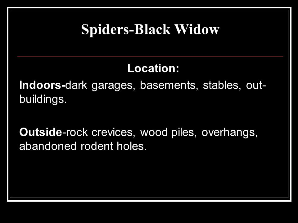 Spiders-Black Widow Location: Indoors-dark garages, basements, stables, out- buildings. Outside-rock crevices, wood piles, overhangs, abandoned rodent