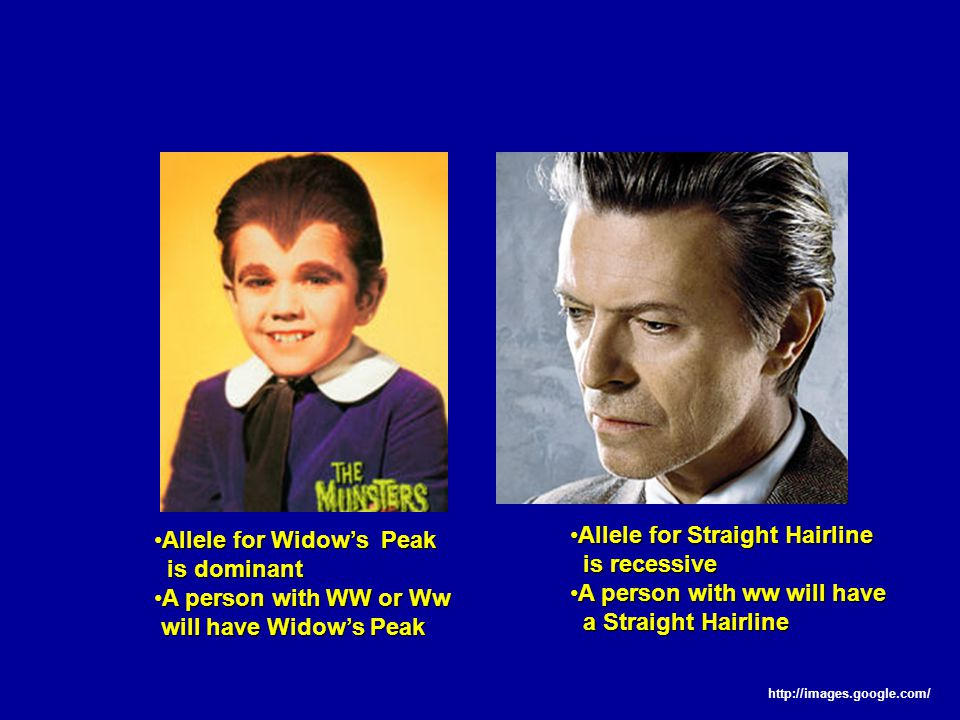 Allele for Widow's PeakAllele for Widow's Peak is dominant is dominant A person with WW or WwA person with WW or Ww will have Widow's Peak will have Widow's Peak Allele for Straight HairlineAllele for Straight Hairline is recessive is recessive A person with ww will haveA person with ww will have a Straight Hairline a Straight Hairline http://images.google.com/