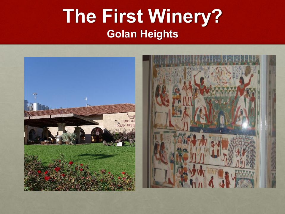 The First Winery Golan Heights