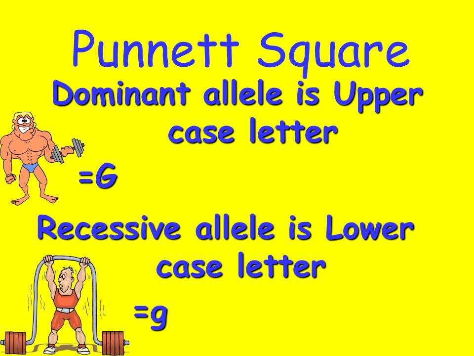 Punnett Square Dominant allele is Upper case letter Recessive allele is Lower case letter =G =g