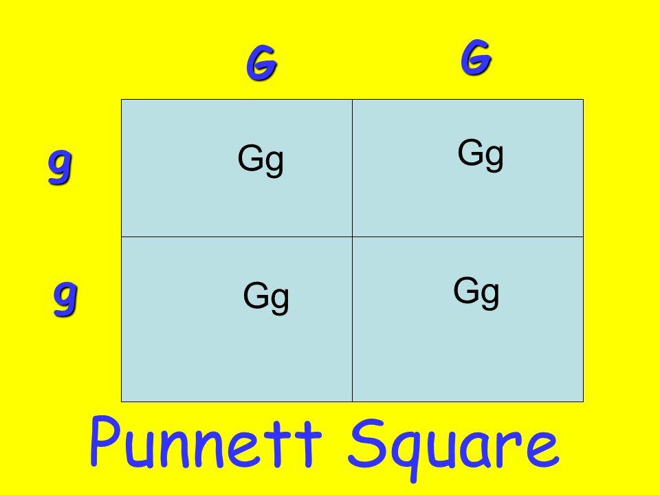 Gg G G g g Punnett Square