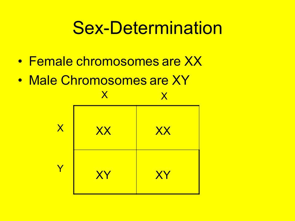 Sex-Determination Female chromosomes are XX Male Chromosomes are XY XX XY X X X Y