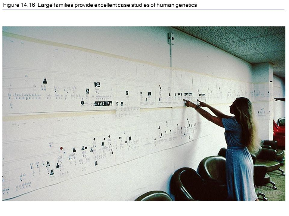 Figure 14.16 Large families provide excellent case studies of human genetics