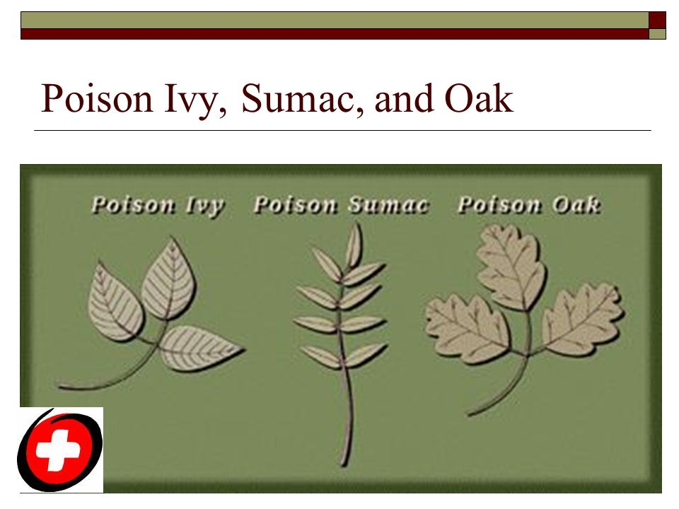 Poison Ivy, Sumac, and Oak