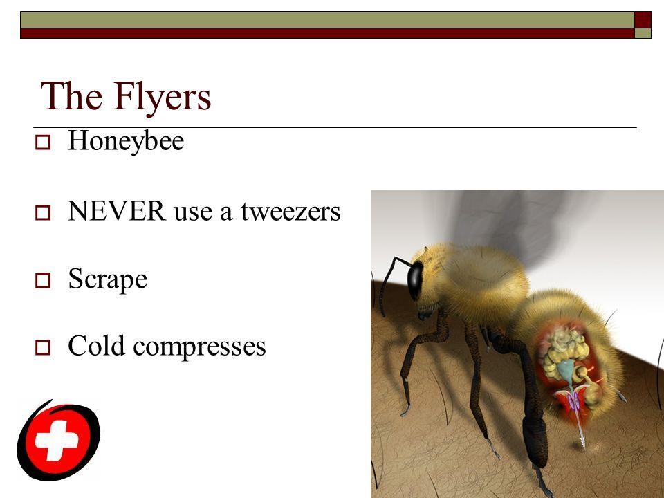 The Flyers  Honeybee  NEVER use a tweezers  Scrape  Cold compresses