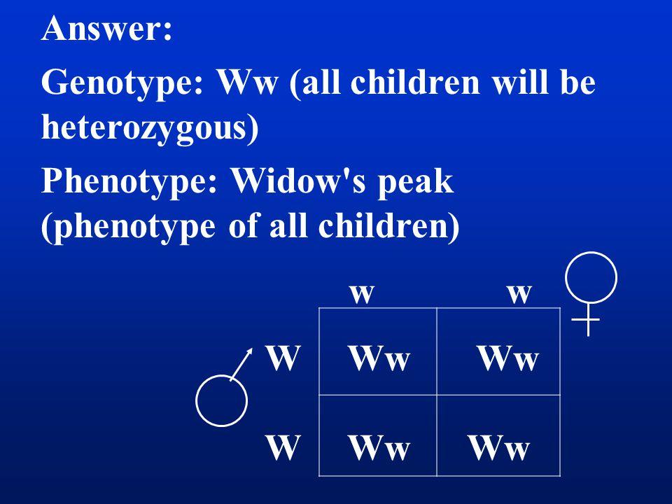 Answer: Genotype: Ww (all children will be heterozygous) Phenotype: Widow s peak (phenotype of all children) w w W Ww Ww