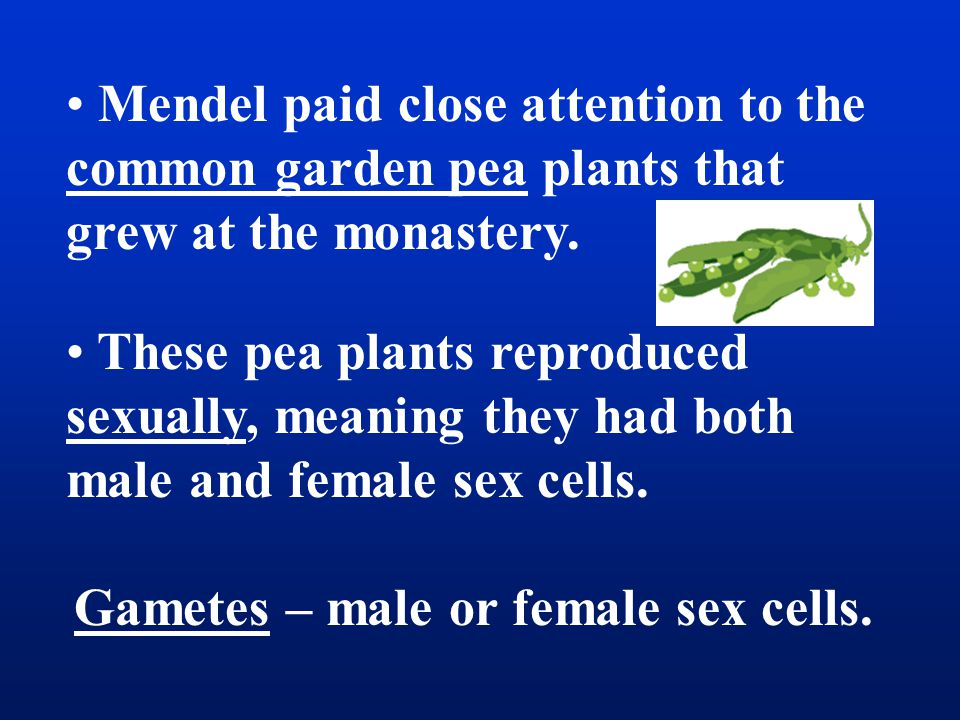 Alleles – Gene form, Y or y, for each variation of a trait of an organism.
