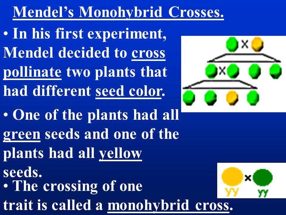 Mendel's Monohybrid Crosses.