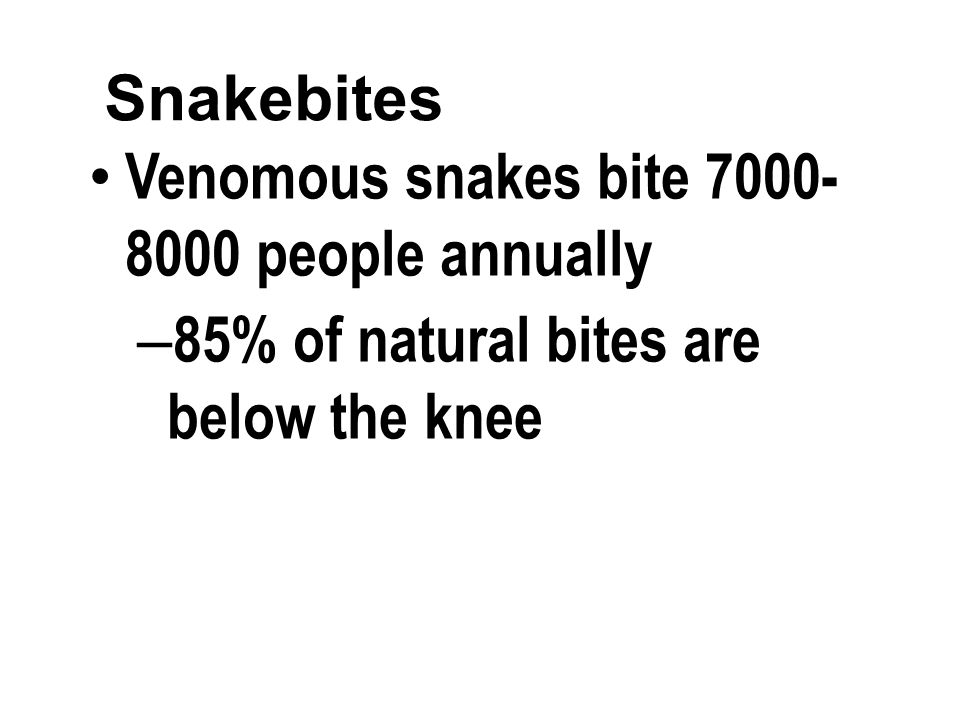 Snakebites Venomous snakes bite 7000- 8000 people annually – 85% of natural bites are below the knee