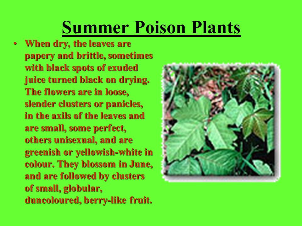 If Exposed to Poison Plants You get the rash from touching the plant, or touching something that has touched it, like your clothes or your dog.You get the rash from touching the plant, or touching something that has touched it, like your clothes or your dog.