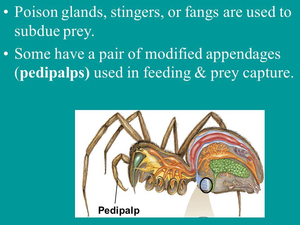 Arachnids Class containing spiders, scorpions, mites, & ticks.