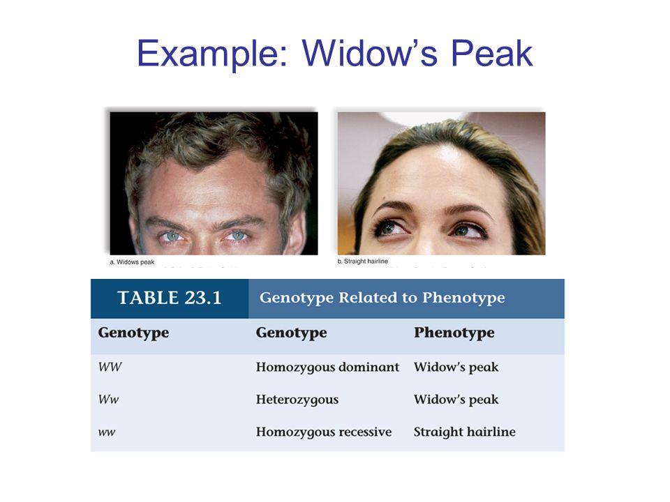 Example: Widow's Peak