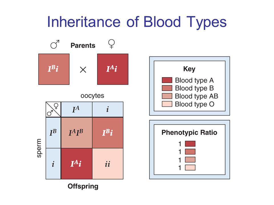 Inheritance of Blood Types