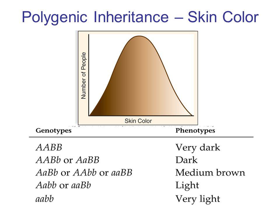 Polygenic Inheritance – Skin Color