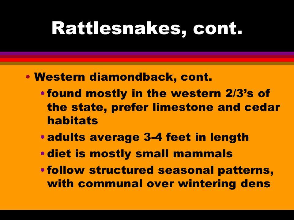 Rattlesnakes, cont.Western diamondback, cont.