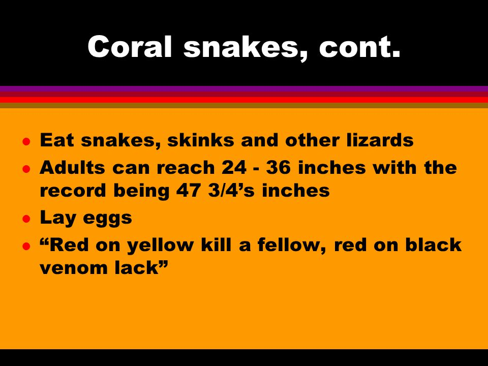 Coral snakes, cont.