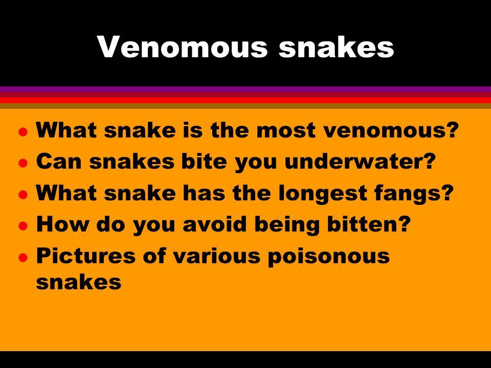Venomous snakes l What snake is the most venomous.