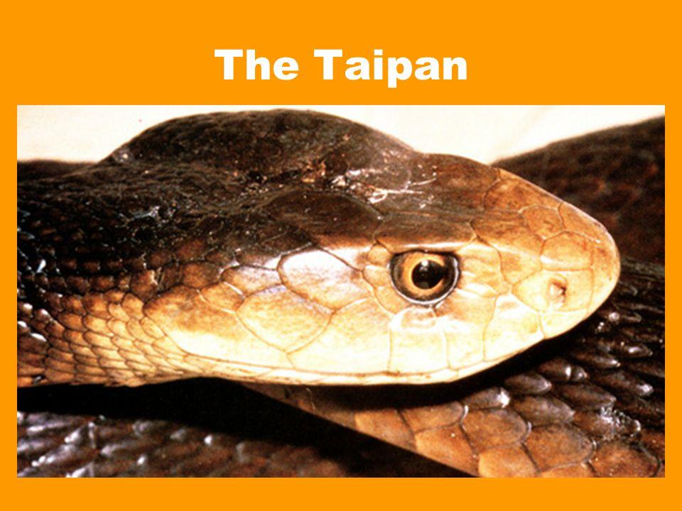 The Taipan
