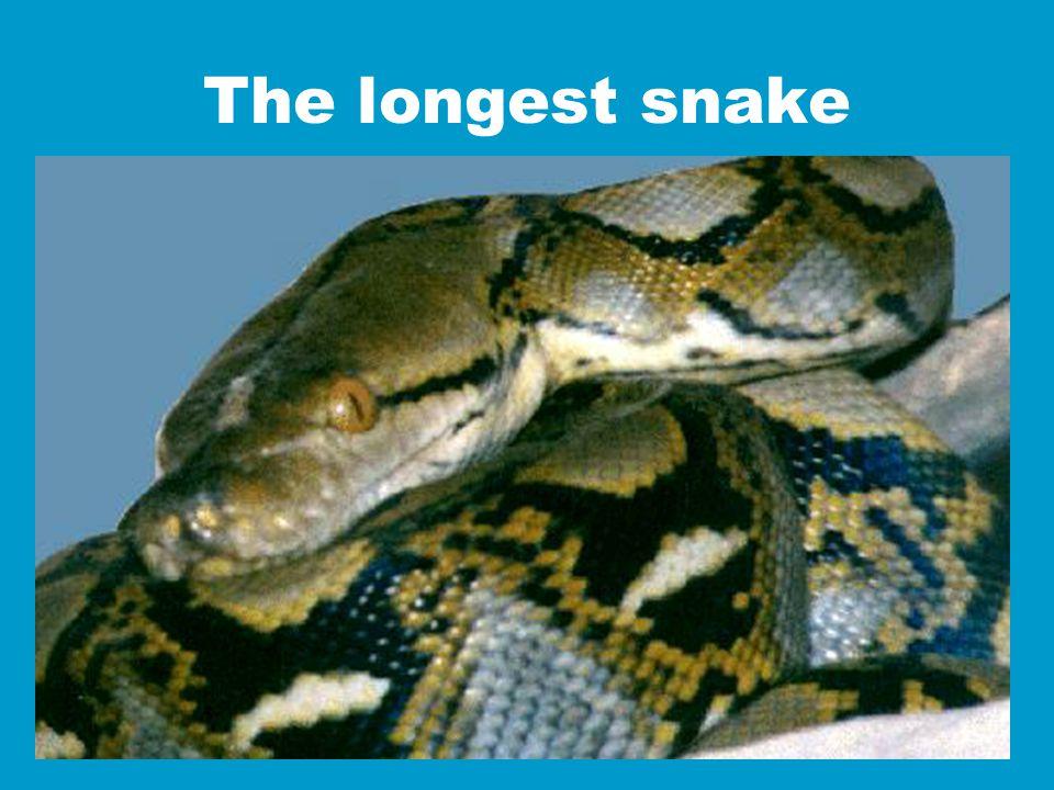 The longest snake