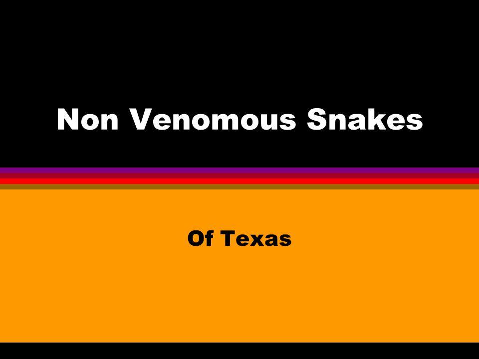 Non Venomous Snakes Of Texas