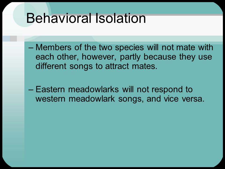 Behavioral Isolation –Members of the two species will not mate with each other, however, partly because they use different songs to attract mates. –Ea