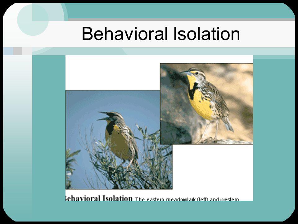 Behavioral Isolation