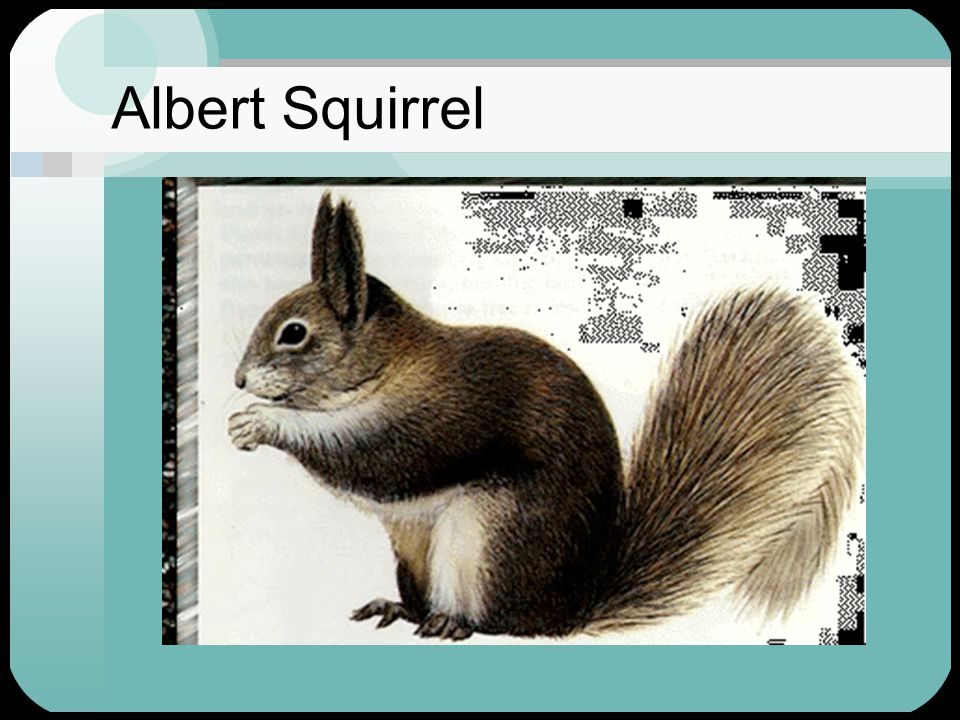 Albert Squirrel