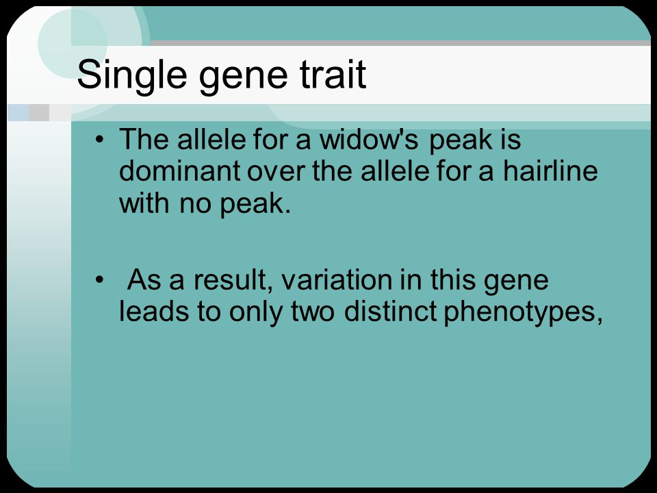 Single gene trait The allele for a widow's peak is dominant over the allele for a hairline with no peak. As a result, variation in this gene leads to