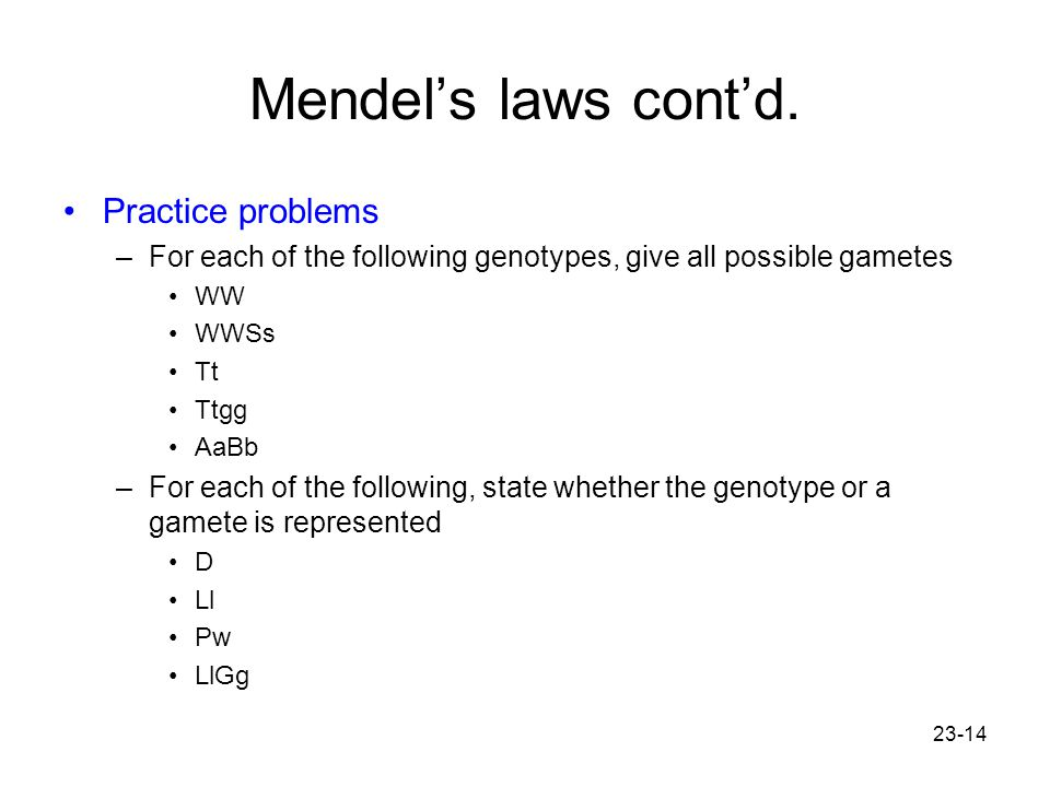 23-14 Mendel's laws cont'd. Practice problems –For each of the following genotypes, give all possible gametes WW WWSs Tt Ttgg AaBb –For each of the fo