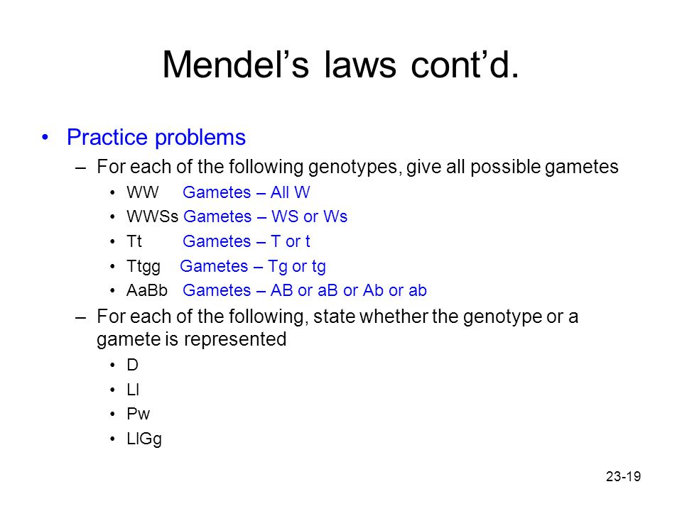 23-19 Mendel's laws cont'd. Practice problems –For each of the following genotypes, give all possible gametes WW Gametes – All W WWSs Gametes – WS or
