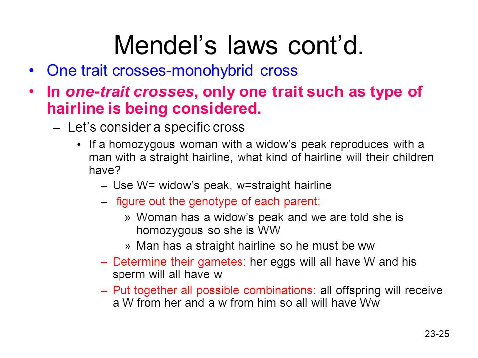 23-25 Mendel's laws cont'd. One trait crosses-monohybrid cross In one-trait crosses, only one trait such as type of hairline is being considered. –Let