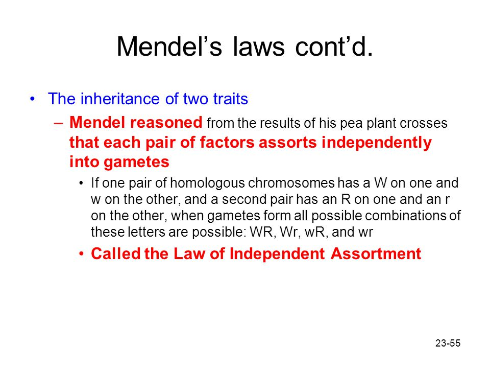 23-55 Mendel's laws cont'd. The inheritance of two traits –Mendel reasoned from the results of his pea plant crosses that each pair of factors assorts
