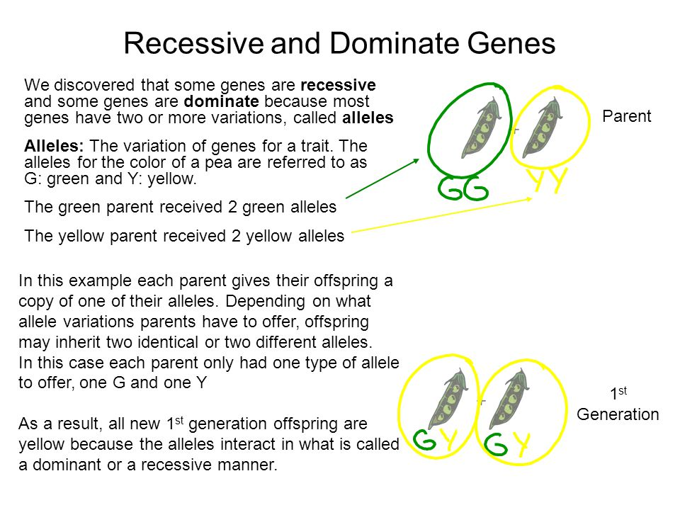 Recessive and Dominate Genes Parent 1 st Generation We discovered that some genes are recessive and some genes are dominate because most genes have two or more variations, called alleles Alleles: The variation of genes for a trait.