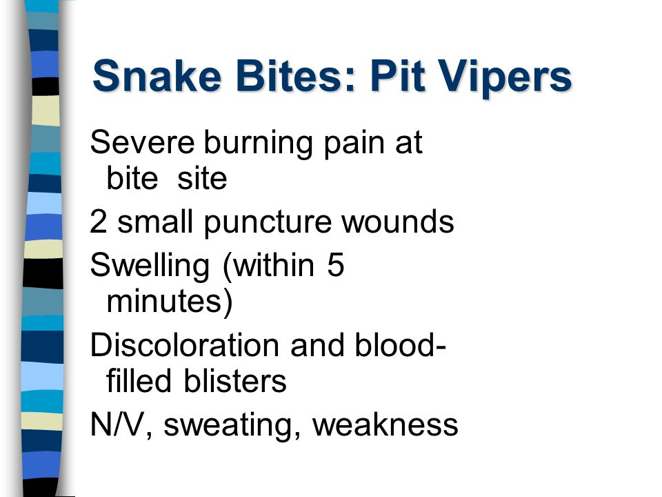 Snake Bites: Pit Vipers Severe burning pain at bite site 2 small puncture wounds Swelling (within 5 minutes) Discoloration and blood- filled blisters