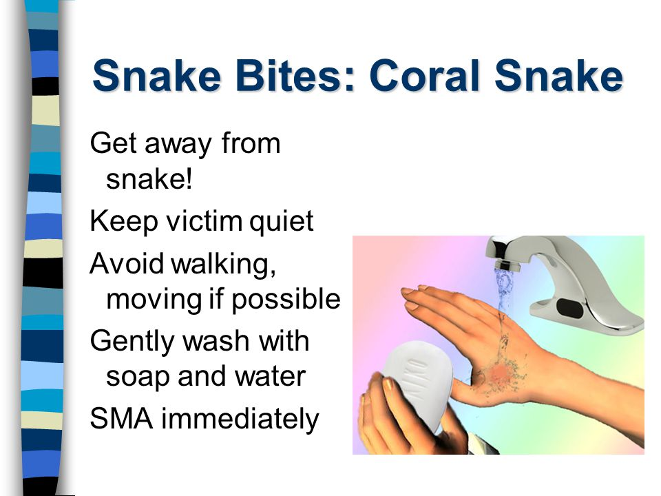 Snake Bites: Coral Snake Get away from snake! Keep victim quiet Avoid walking, moving if possible Gently wash with soap and water SMA immediately