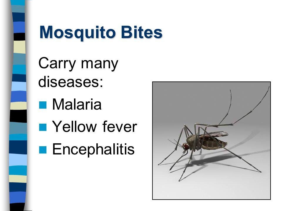 Mosquito Bites Carry many diseases: Malaria Yellow fever Encephalitis