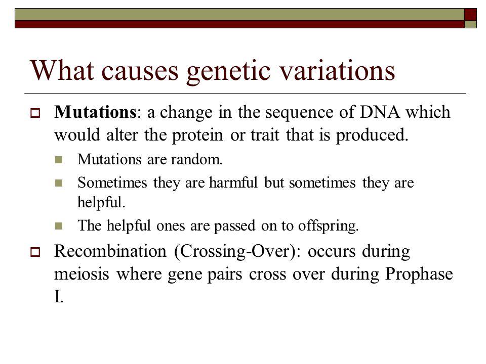 Genetic Drift  Random change in allele frequency in a population.